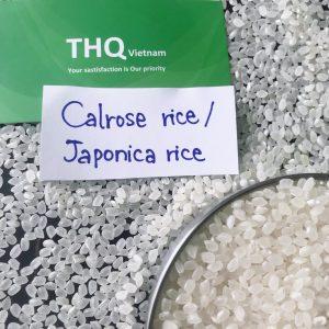 1. Calrose rice/ Japonica rice